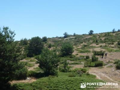 Pinar de Canencia y Mina de Plata del Indiano;clubes de senderismo;excursiones en el dia